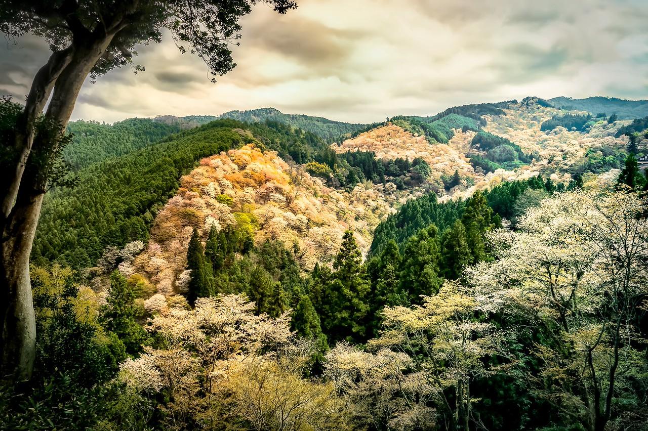 valley,cherry blossoms.nara,japan,landscape,travel
